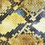 Amphetamine Ballads Lyrics The Amazing Snakeheads