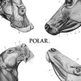This Polar Noise (EP) Lyrics Polar.