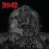 Brutalive The Sick Lyrics Benighted